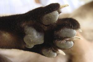 Cat Scratch Disease: Symptoms & Treatment