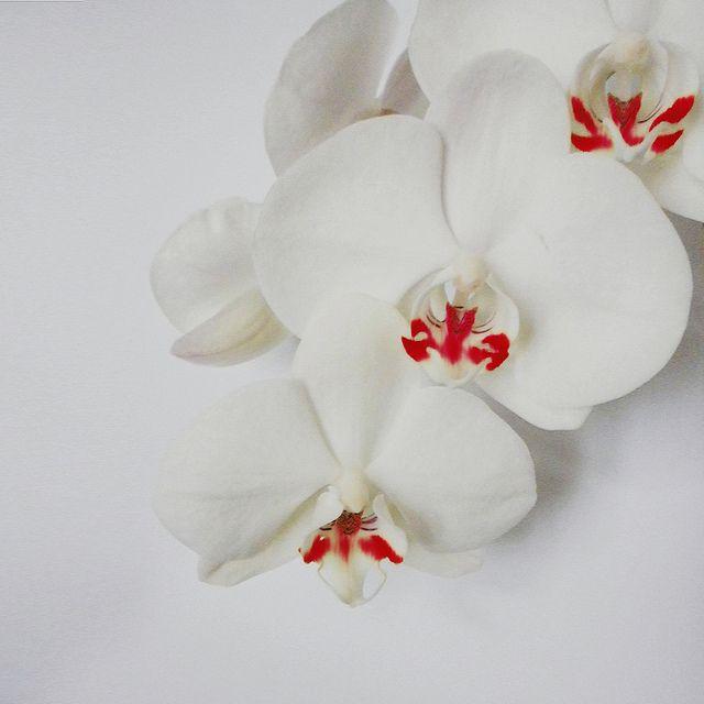 Dressed in white / Vestite di bianco by Giorgio Ghezzi, via Flickr