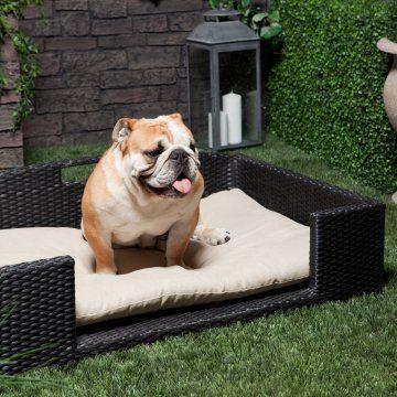 510 best love bulldogs images on pinterest | english bulldogs