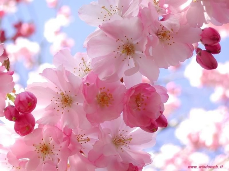 Pink flowers <3