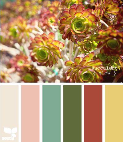 Design Seeds: succulent glow 04.10.11