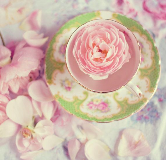 Pink vintage roses tea cup nature shabby chic photo wall decor original fine art 5x7 photograph pastel baby nursery kids romantic