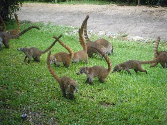 Grand bahia akumal wildlife - YouTube |Grand Bahia Principe Tulum Animals