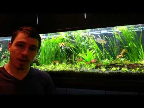 1 how to cycle new tank youtube aquariums pinterest for Cycling a fish tank