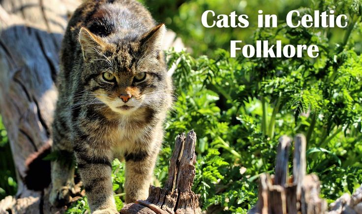 Cats in Celtic Folklore