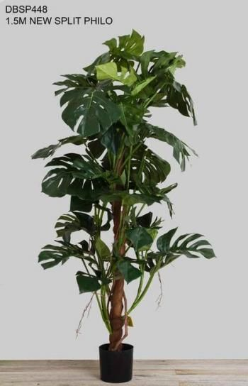 Split Philo Plant