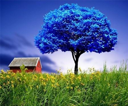 Výsledky obrázků Google pro http://wallpaperpassion.com/upload_big_thumb/20091/blue-tree-wallpaper.jpg
