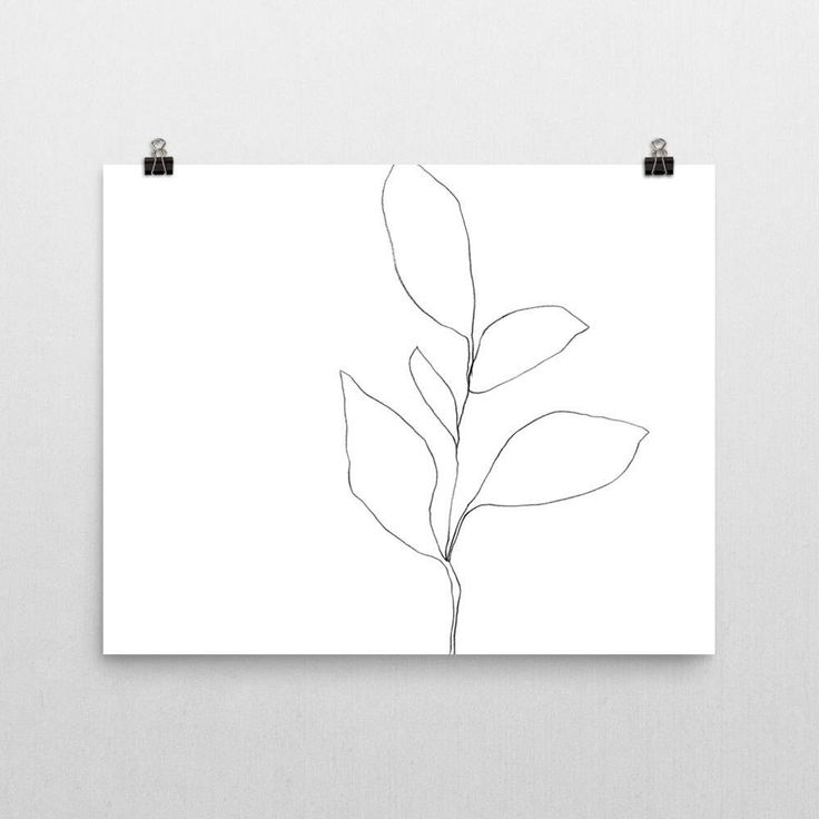 Black & White Botanical Illustration, Contemporary Art, Botanical Art, Line Drawing, Scandinavian Art, Botanical Wall Art, Framed Art Print by GalleryJ9 on Etsy https://www.etsy.com/listing/537473830/black-white-botanical-illustration