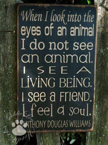 When I look into the eyes of a horse I see a living being, a friend, a soul.