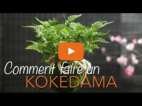 Comment faire un KOKEDAMA ? KOKEDAMA SUSPENDU - KOKEDAMA PARIS - Chroniqueur jardin Franck PROST - YouTube