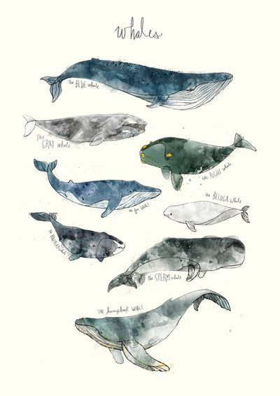 Whales Art Print- society6.com