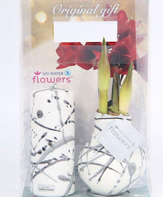 Kaars en Amaryllis in stijl Waxz Vermeer  Deze unieke Waxz Vermeer cadeauverpakking bestaat uit een Waxz Vermeer amaryllisbol en een fraaie kaars in dezelfde stijl. Parchtig om te zien. Deze stijl brengt meerdere kleuren als kunstige ornamenten aangebracht op een kleurrijke waslaag. De prachtige amaryllis bloeit met mooie rode bloemen en brengt 2 bloemstelen voort met ieder 3 of 4 bloemen. Afhankelijk van de warmte van de standplaats bloeit de amaryllis 3 tot 6 weken lang. Amaryllis Waxz…