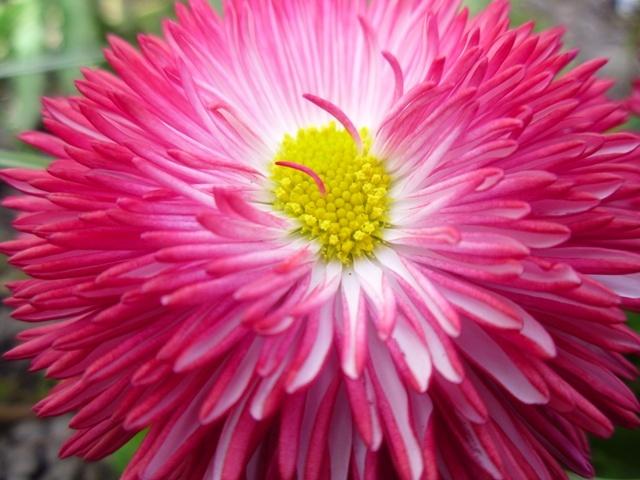 Home Jules: Flower Friday