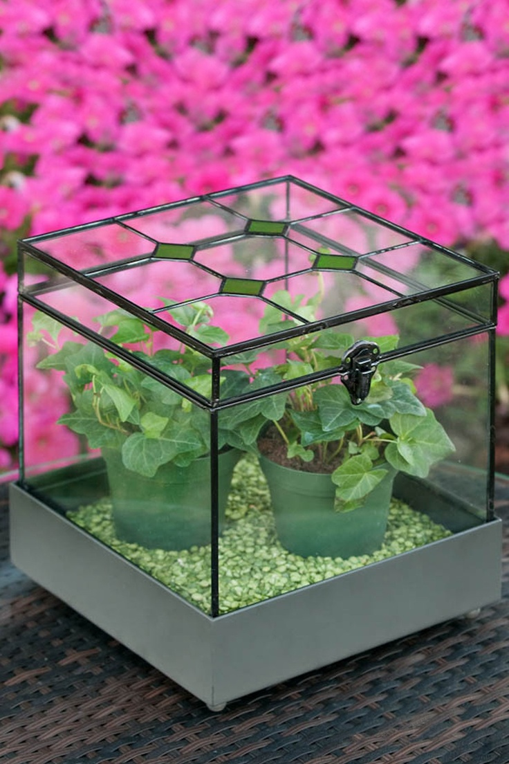 120 Best Terrariums Images On Pinterest Terraria