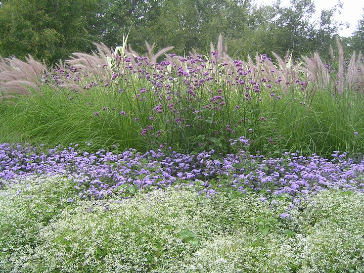Here is another planting that features a couple of the same annuals, but in linear bands instead of blocks. You can see the fuzzy pink plumes of fountain grass, Brazilian verbena, floss flower (Ageratum houstonianum 'Blue Horizon'), Euphorbia 'Diamond Frost' and Alyssum lobularia (Sweet alyssum).