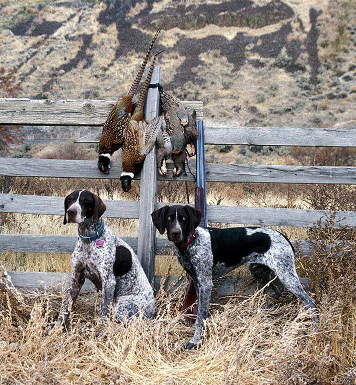 Hunting Dog Training Huntingdogtraining Quick Dog Training Tips
