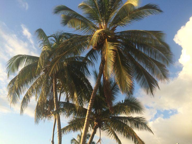 Palm Trees, Maui