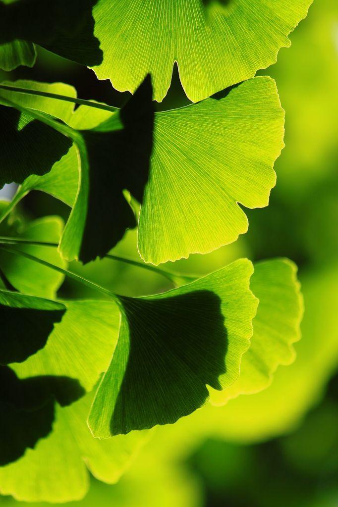 Green* http://calgary.isgreen.ca/recycling/residential/recycling-trap/