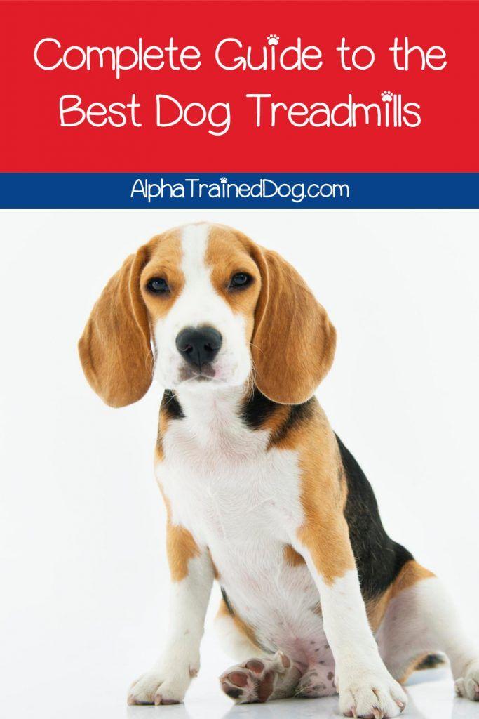 Top 5 Best Dog Treadmills To Give Fido A Good Workout Alpha