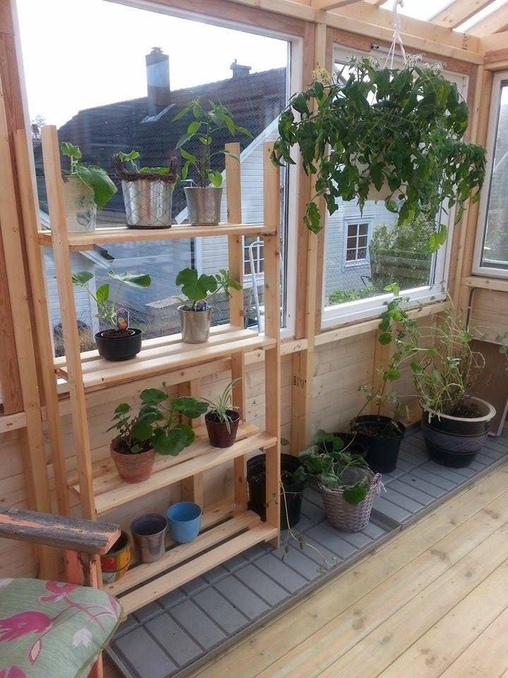 Litt grønt har jeg jo fått inn i huset mitt da :) Blir nok mye mer neste år :)