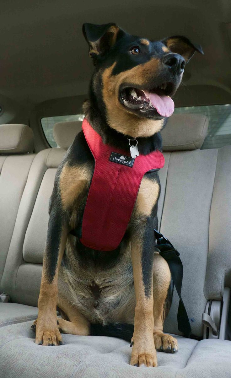 Sleepypod Clickit Sport >> 1000+ ideas about Dog Car Seats on Pinterest | Dog Car, Dog Car Seat Covers and Dog Seat Covers
