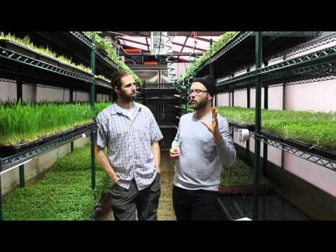 Building a Thriving Microgreens Business from Scratch, The Founder's Story with Chris Thoreau | Permaculture Voices.