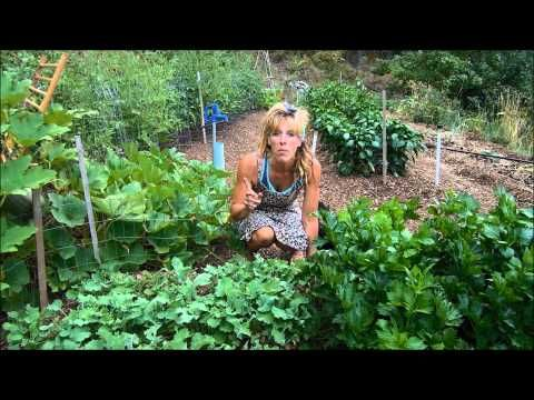 I love Starry Hilder's blog! Back To Eden Gardening: Woodchips And Less Water - YouTube