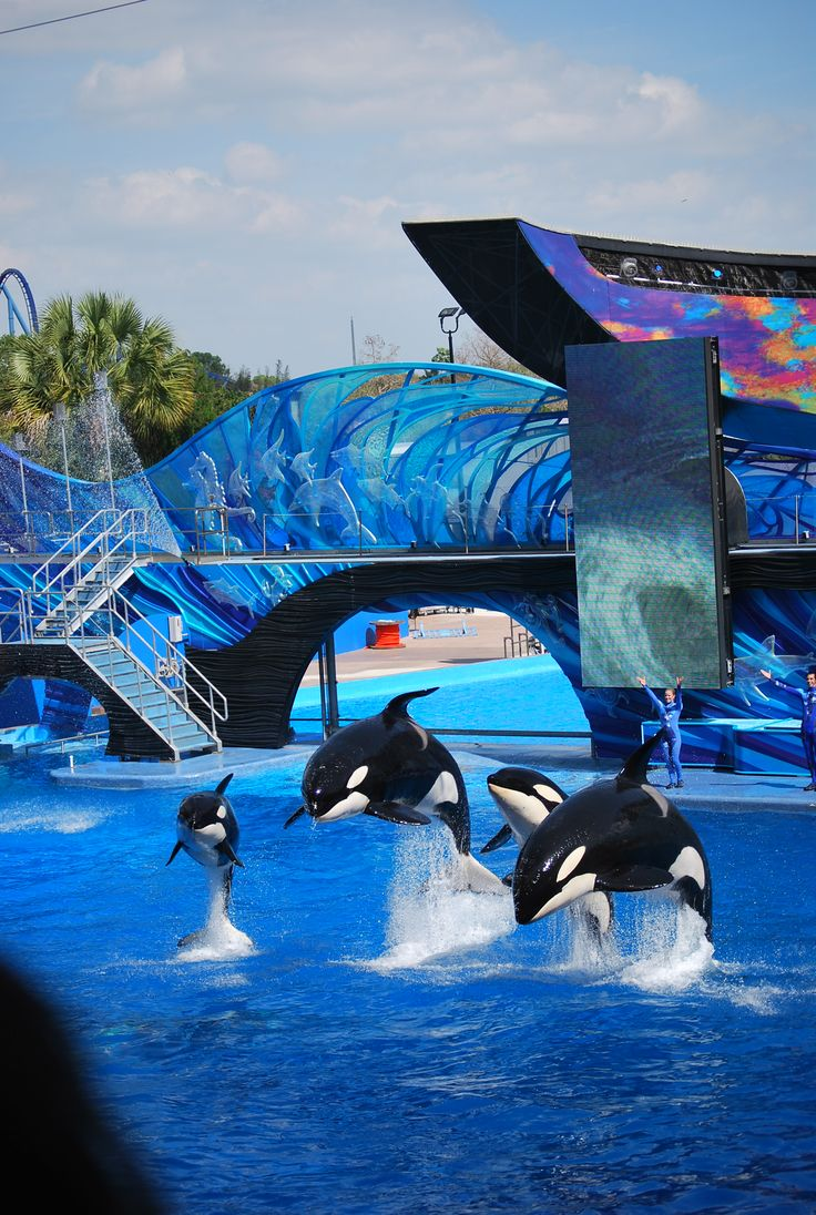 134 Best Images About Sea World On Pinterest San Diego
