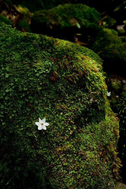 Un minúsculo detalle del bosque en la isla de Yakushima, Japón