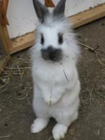 Happy Hoppers Rabbit Forum