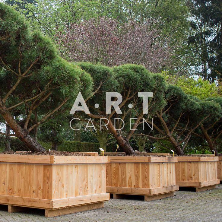 Acheter vos arbres chez le sp cialiste du jardin zen for Jardin zen acheter