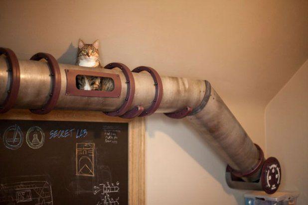 Le tunnel pour chat sur les murs
