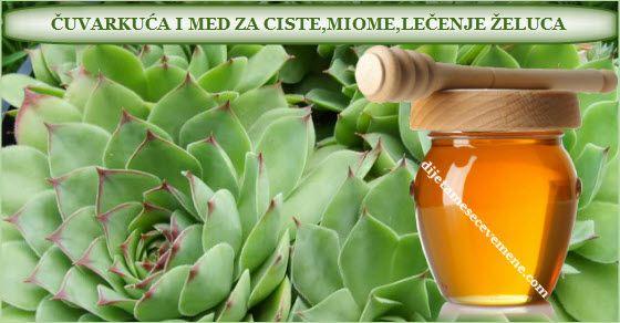 čuvarkuća i med za ciste | miome | kao lek | za upalu uha