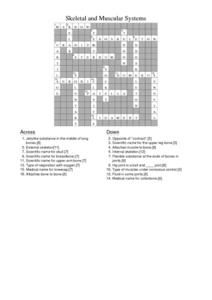 skeletal and muscular systems crossword puzzle answers worksheet hot resources for november. Black Bedroom Furniture Sets. Home Design Ideas