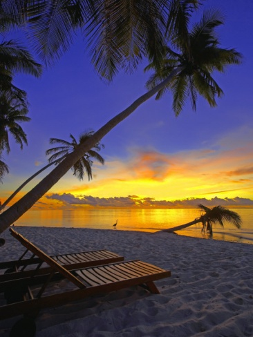 Deckchair on Tropical Beach by Palm Tree at Dusk and Blue Heron, Maldives, Indian Ocean Photographic Print by Papadopoulos Sakis at Art.com