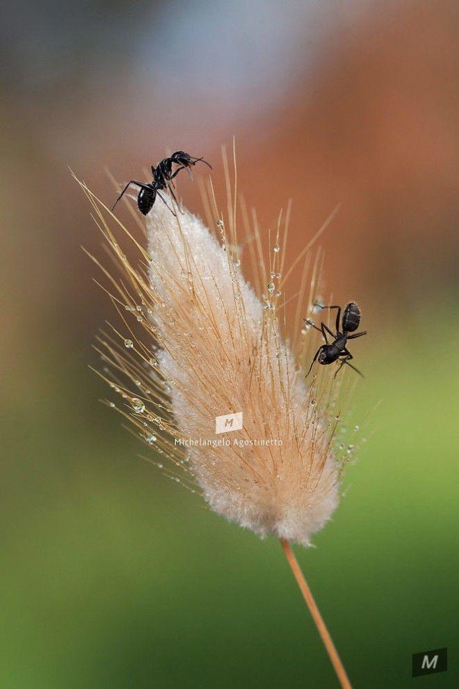 ants dancing