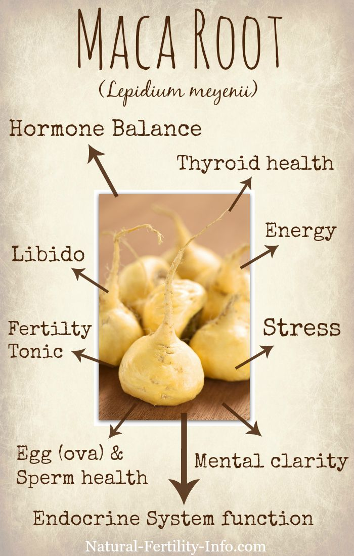 Maca has been scientifically researched for the use of increasing fertility since 1961 and has been shown to contain specific compounds called glucosinolates which directly can affect fertility for both men and women.  #NaturalFertility