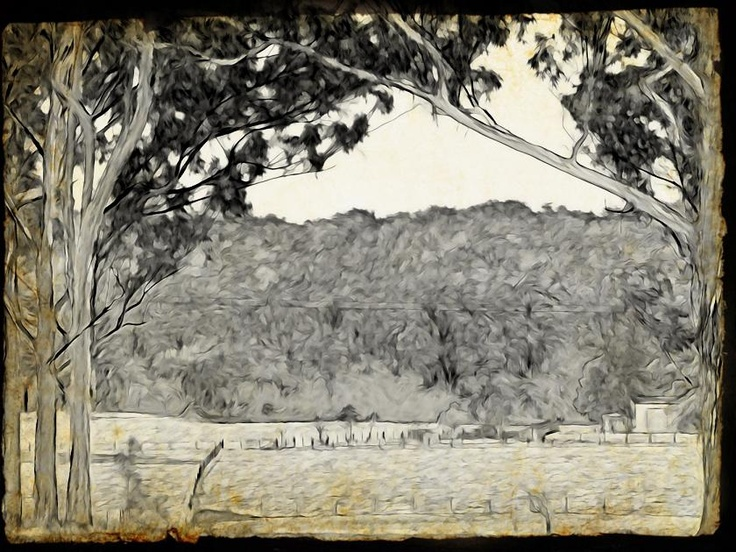 Martinsville meadow