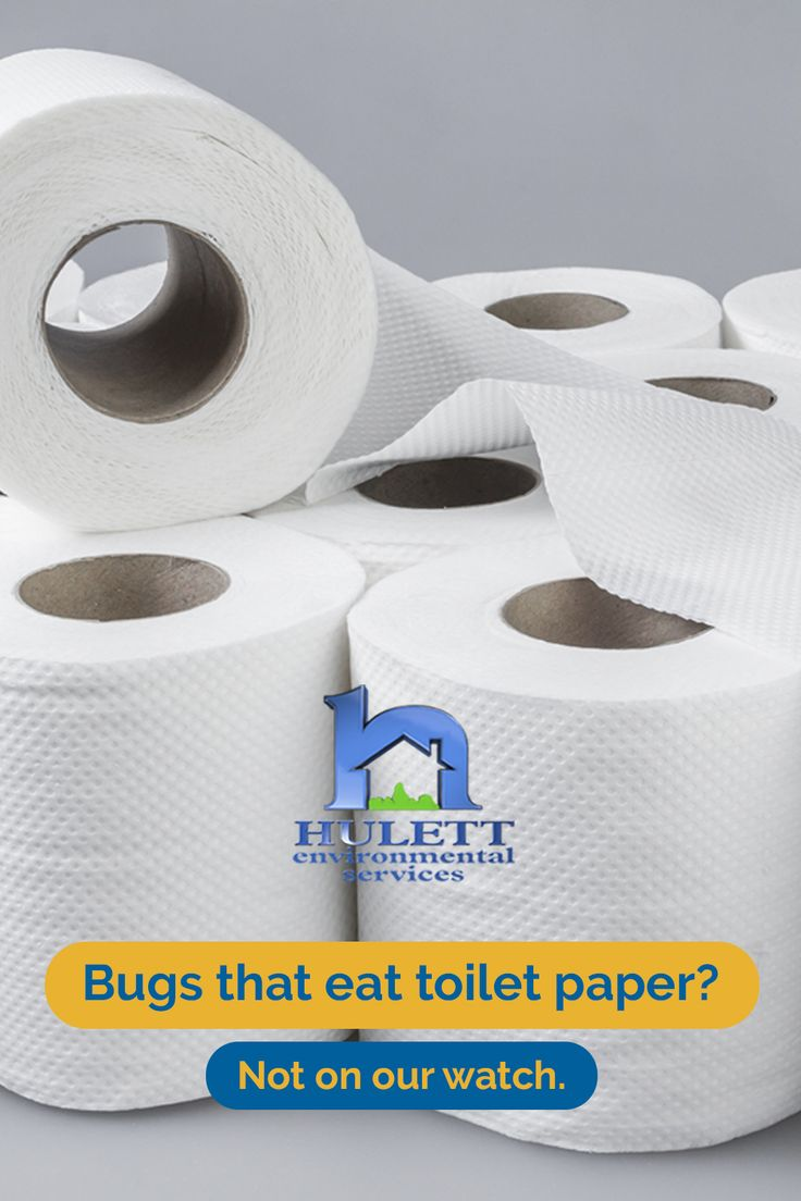 Bugs that eat toilet paper? in 2020 Silverfish, Paper, Bugs