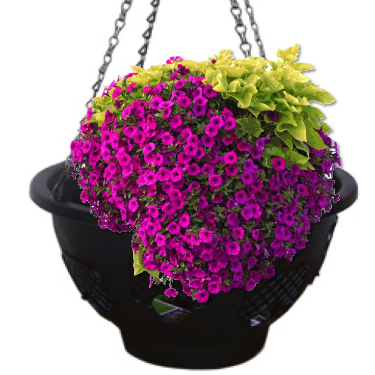 Flower Baskets Usa : Best diy hanging basket images on