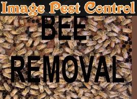 bee removal services http://www.imagepestcontrol.com/en/bee_control.php