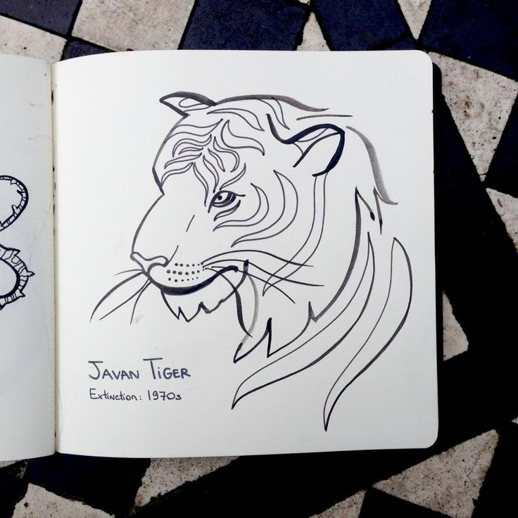Javan Tiger. Part of my Alphabet of Extinct Species project in which I draw an animal everyday.
