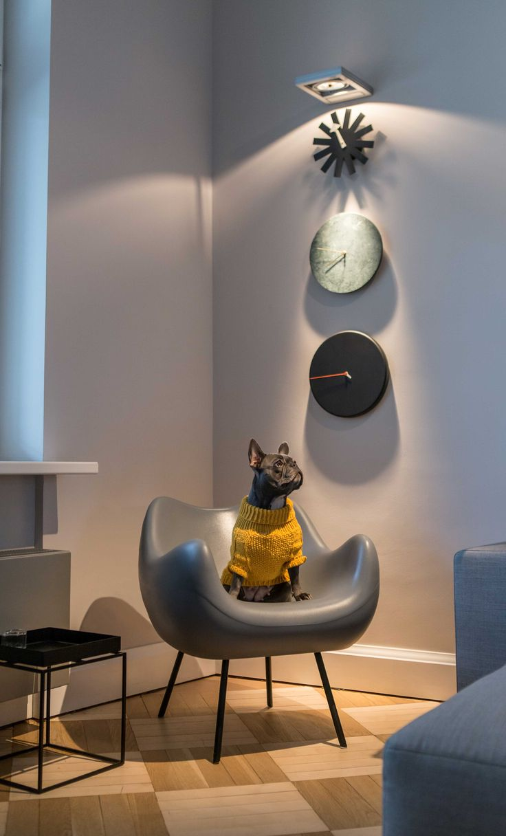 session with dogs #interior #session #dog #design #photography #studio #absynt #studioabsynt