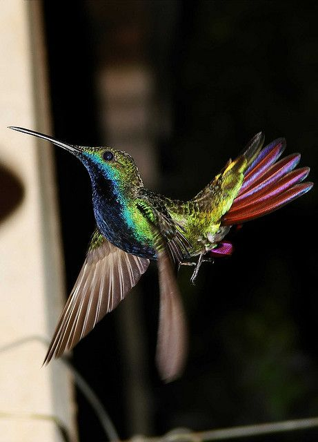Hummingbird  by Marcelo Cazani.  An amazing photo capturing the wing beat, and all of the bird's beautiful coloring!