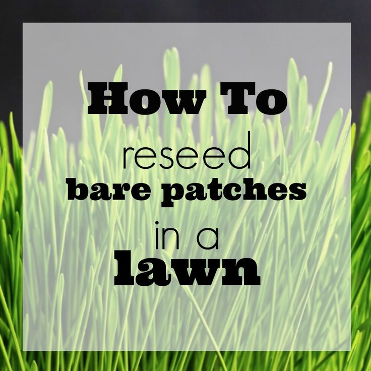 How to reseed bare patches in a lawn. If your grass has trouble spots, this is an easy list of instructions for laying seed to fill in the holes.