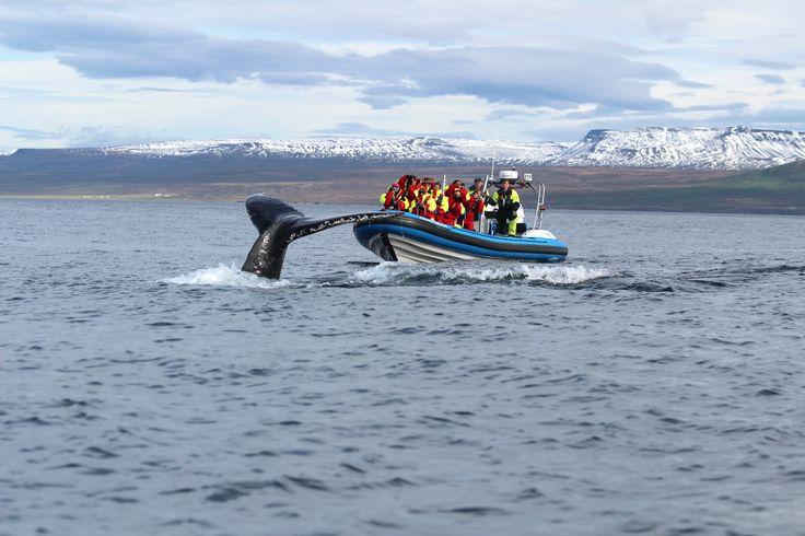 Mavi Lagün, İzlanda // Blue Lagoon, Iceland