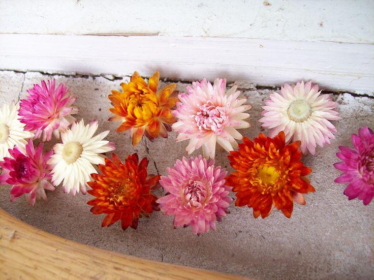 Szalmavirágok