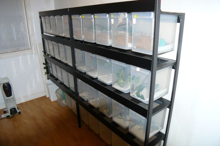 Vivarium pour crested gecko - File box Crested Gecko Cages, look like they hang and slide on tracks.