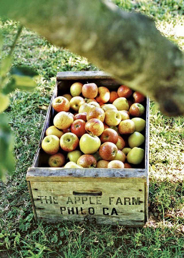 Delmosa Highlight: The Autumn/Fall season with the Fall harvest.