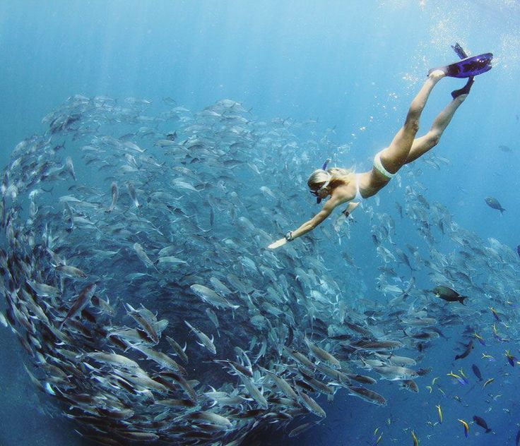 fascinating underwater world...love the oceans and they will love you back <3 nunuibali bikini